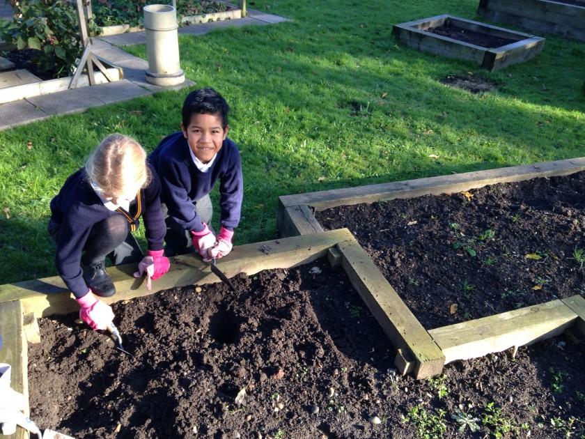 School garden week 1