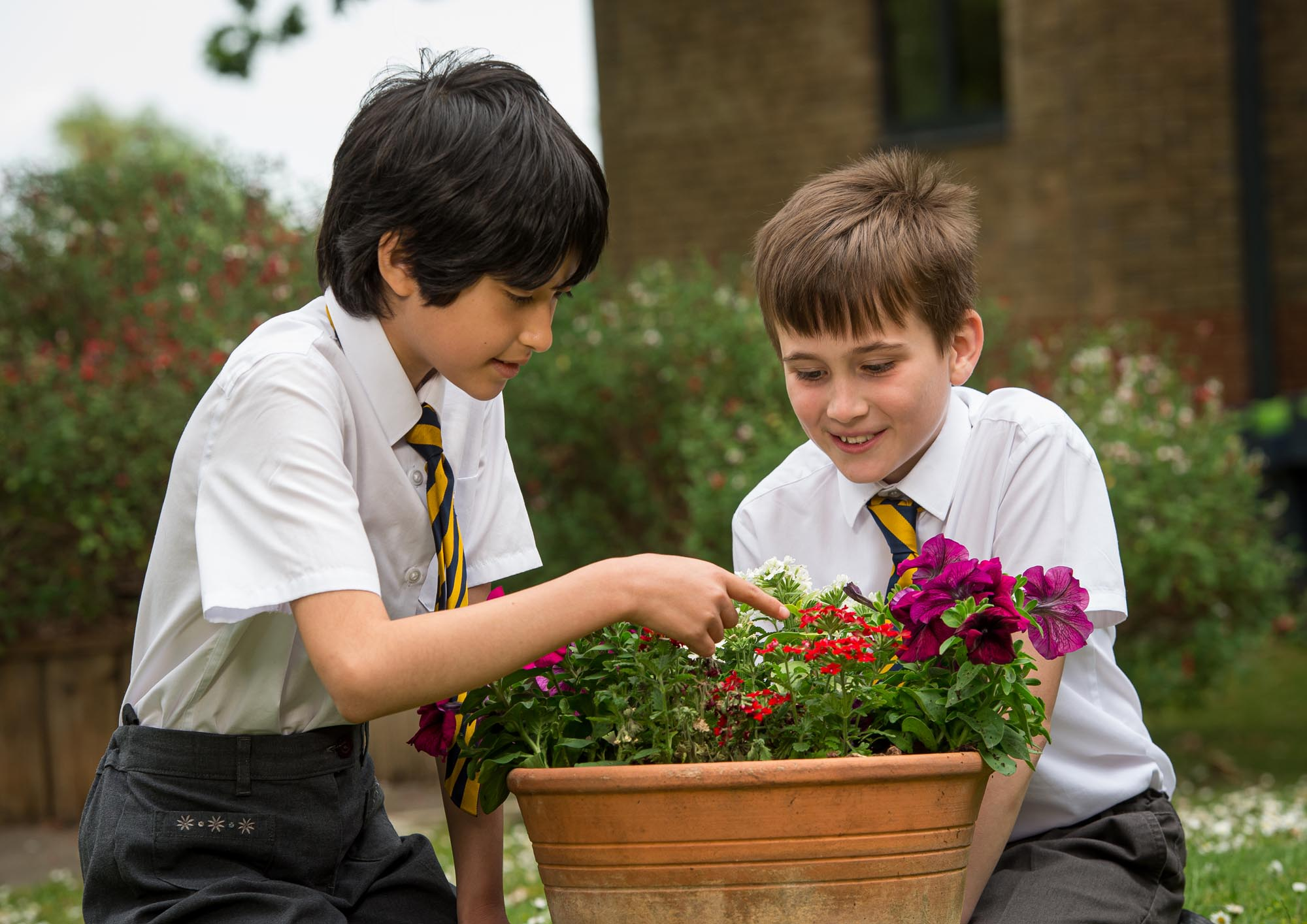 Two boys looking at flowers in a pot