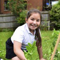 Weeding the peas in the garden